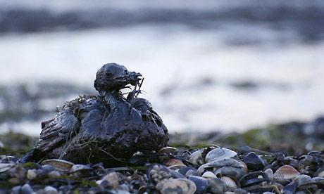 L'inquinamento Del Suolo L'inquinamento Del Mare le